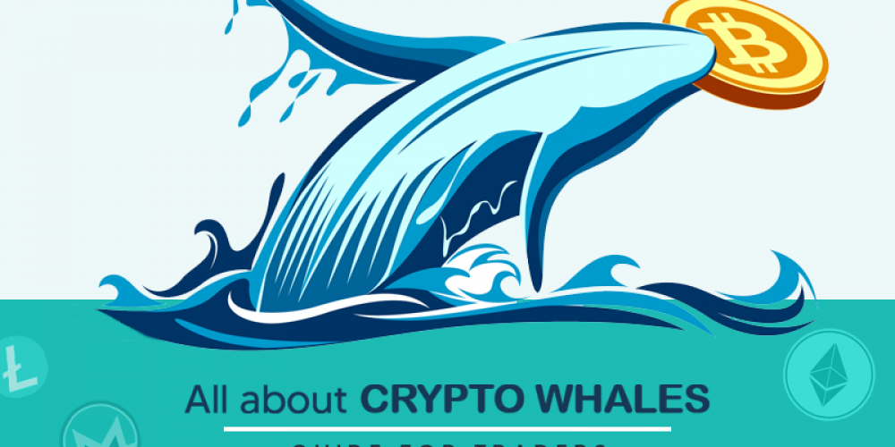 All About Bitcoin Whale | Eye Opening Guide To Crypto Traders