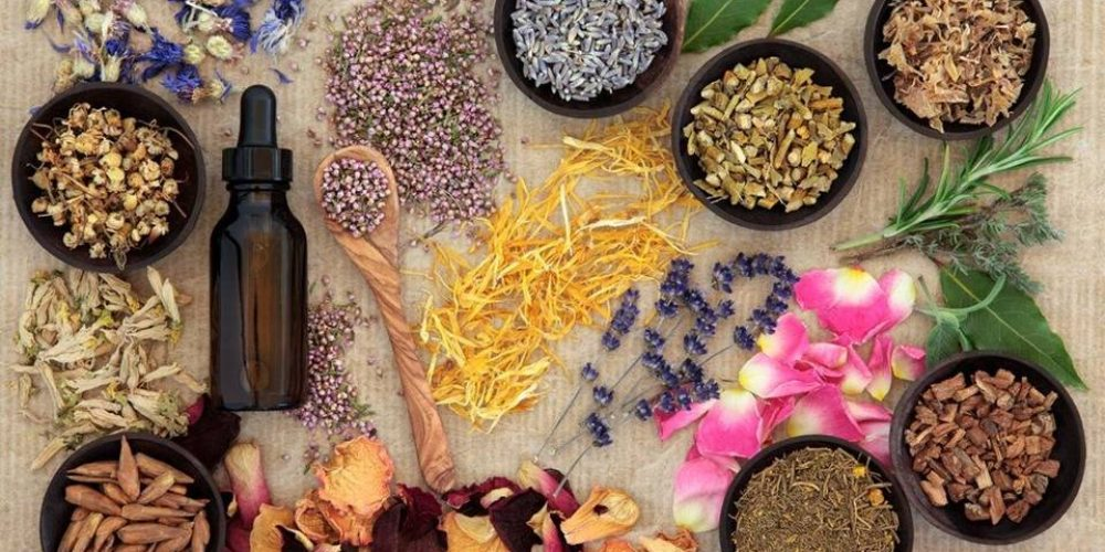 6 Ayurvedic herbs to protect your body in winter