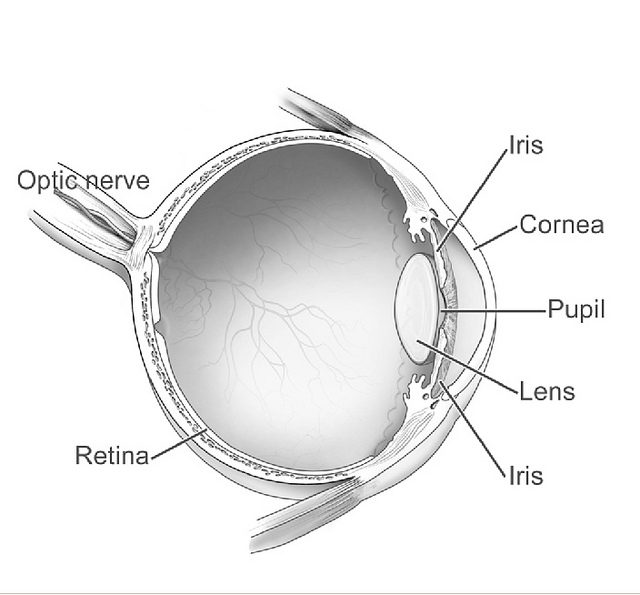 The role of telemedicine in retinopathy of prematurity is confirmed