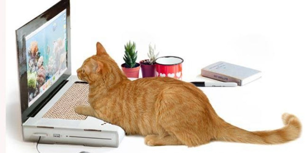 Some Important Gadgets for Pets